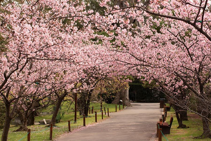 Resultado de imagen para jardin japones